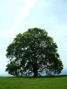 arbre du caire tourettes sur loup (9)